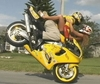 Stunters Foreplay - Click To Enlarge Picture
